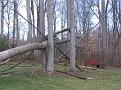Tree Down (9)