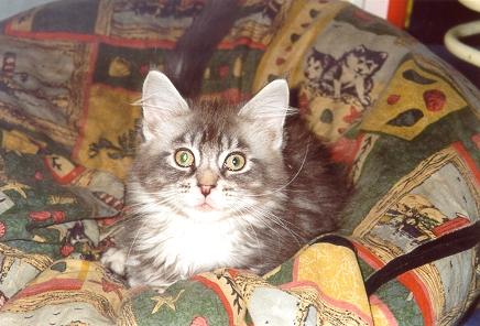 010302 Nigel 12 weeks old