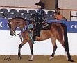TAMAR ELEGANT MISS #614702 (Neposzar+ x Equidam Elan) 2002 bay mare bred by Tamar Arabians/ Tamara K Hanby