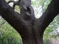 powerful trunks 239
