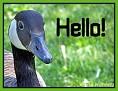 Hello017