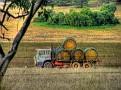 Wellington to Mumbil Farm 009 haymaking