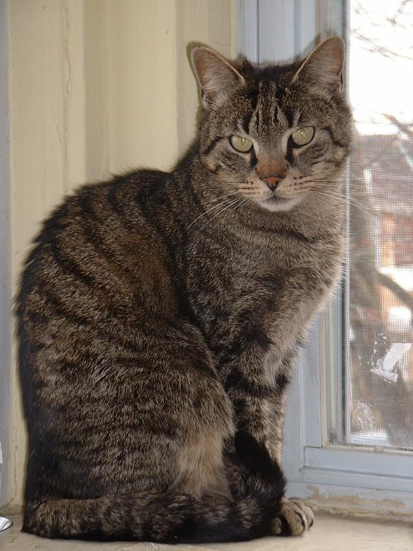 Cat March 2 2002