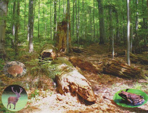 2007 PRIMEVAL BEECH FORESTS 02