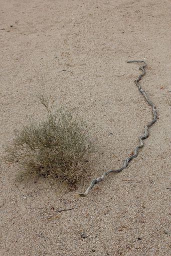 snake-like stick