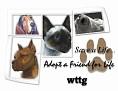 dcd-wttg-Adopt a Friend-lc.jpg