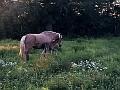 Brand new foal
