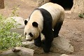 070420 SDZoo 0128