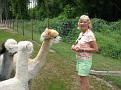 Visiting a nearby Alpaca Farm in Green Creek, Nj!!!