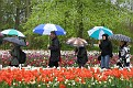 Keukenhof 2010 (57)