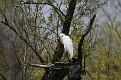 Spring Egret #7