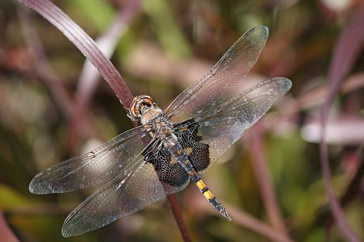 Black Saddlebags 2016 #14