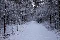 Snow 2010 Almen (34)
