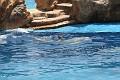 070417 SeaWorld 0068