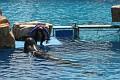 070417 SeaWorld 0200