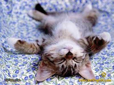 cute kitty sleeping