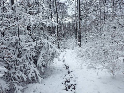 Weg durch Reiner Wald
