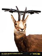 Die neuen Mountainbikes sind da.