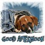 1Good Afternoon-blujeanpup