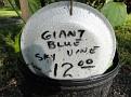 Plants Names DX7 116