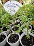 Plants Names DX7 166