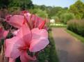 Gardens 450