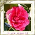 Silver Pebbles (SilverPebbles) avatar