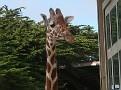 SF zoo 34