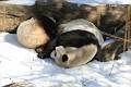 070216 Natl Zoo338