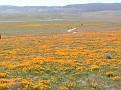 Poppy Reserve2008 006.jpg