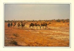 Mauritanie - Atlantic Coastal Desert