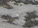 Calais Beach 20110223 008