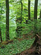 Bärenklau am Fahnenstein