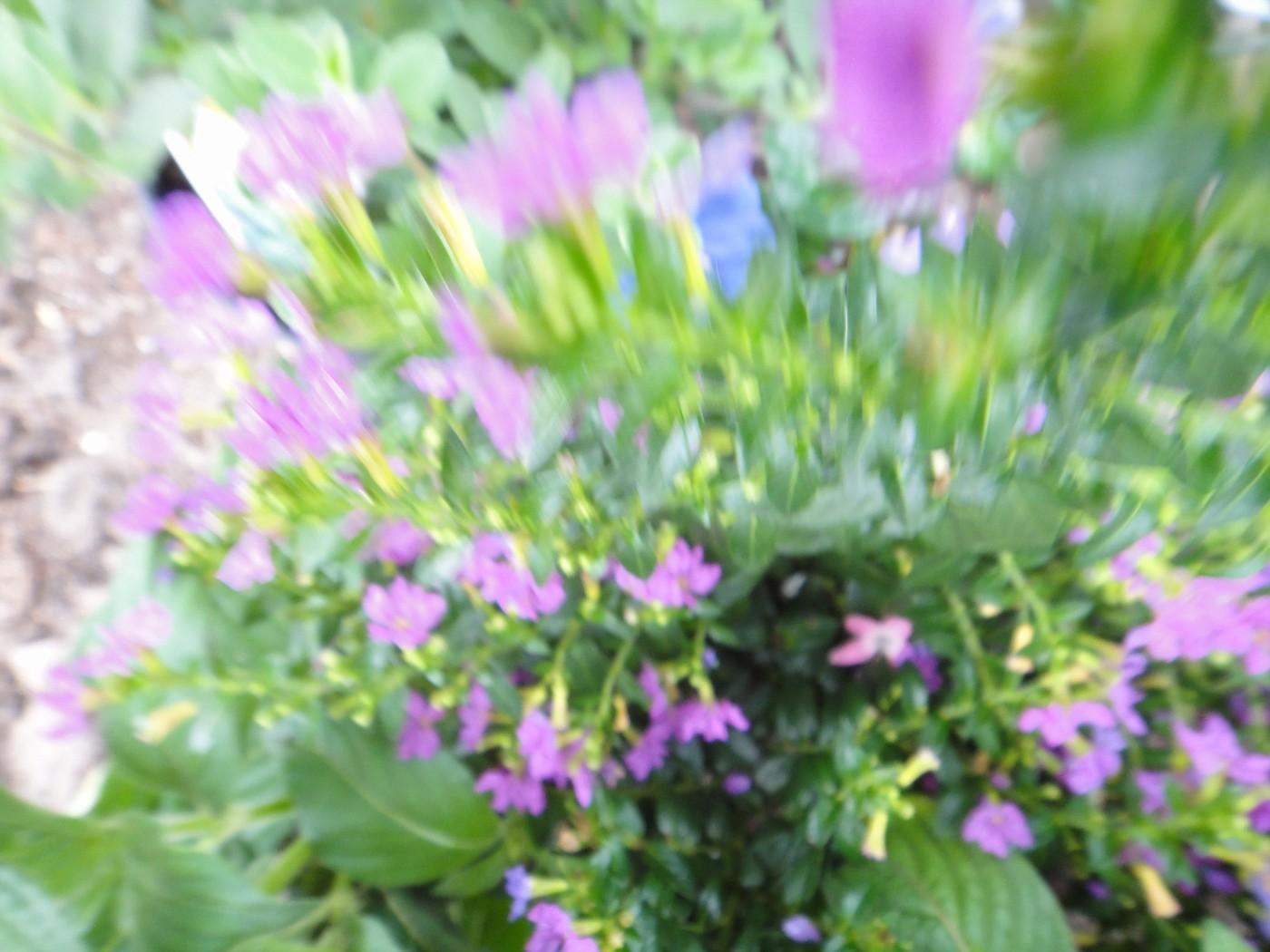 flowers 083.JPG