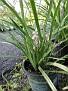 Plants Names DX7 232