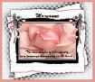 Maryanne-gailz-pink rose