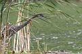 Heron Floating Island #5