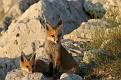 Red Fox June Series #3