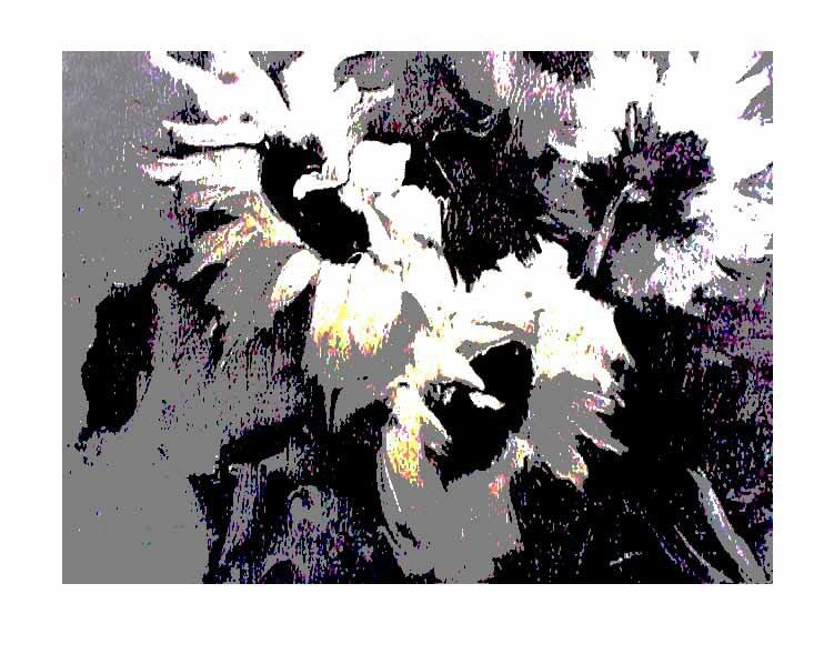 The White Sunflower @2008 R valerie jagiello