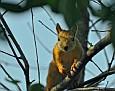 Летняя белка Summer squirrel DSC 4085 012 4 1