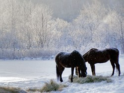 snow and frost