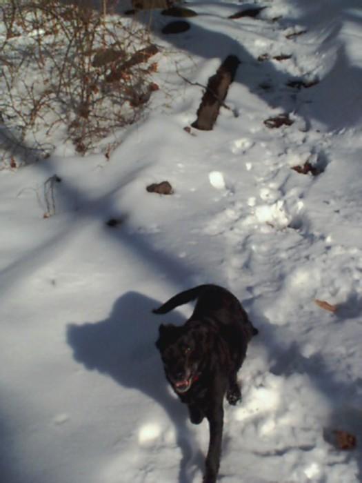 Barney in snow