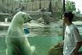 Face to face with a polar bear