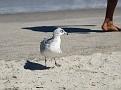 """Off My Beach, Human!"""