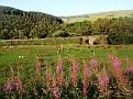 Landscape of Cumbria