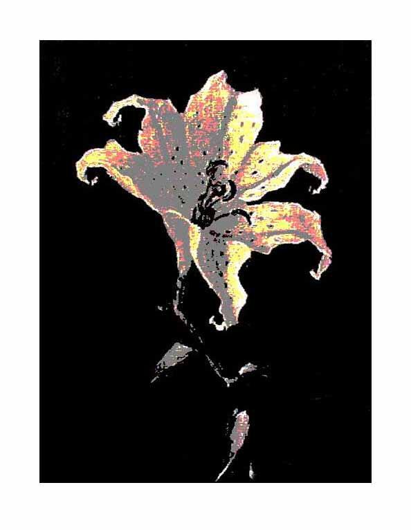 Black Tiger Lily Right @2009 R valerie jagiello
