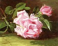 Roses [1898]