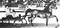 MON-BO+ #40727 (Pomona Ahmen x Bonita, by Caravan) 1966-1993 bay stallion bred by Jedel Arabian Horse Ranch; sired 26 registered purebreds