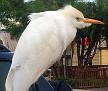 bird near the pizza place