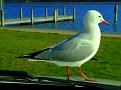 Bonnet Seagull 012